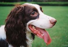 ¿Tu perro tiene mal aliento? Aquí te contamos cómo solucionarlo