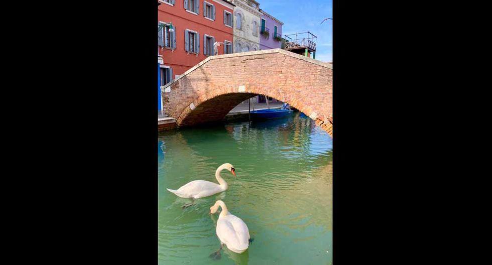 Se pueden apreciar peces y cisnes.(Foto: Facebook / Venezia Pulita)