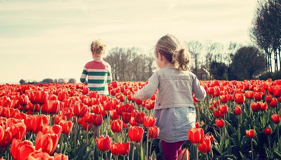 Miles de extranjeros visitan Holanda durante los meses de marzo, abril y mayo para ver los tulipanes en pleno esplendor. (Pixabay)