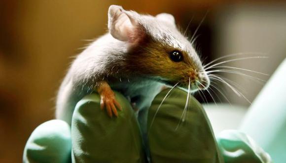 Una terapia génica devuelve a ratones sordos el oído