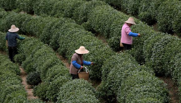 El país asiático está trabajando para lograr una mejoría fundamental en su medio ambiente para 2035 (Foto: pixabay)