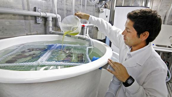 El Ministerio de la Producción (Produce) anunció que este año lanzará cuatro concursos para impulsar la innovación en pesca y acuicultura con un presupuesto de más de S/17 millones. Los concursos financiarán servicios de extensión, fortalecimiento de capacidades en servicios de I+D+I, investigación adaptativa e investigación aplicada y desarrollo tecnológico en ambos sectores. (Foto: El Comercio)