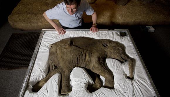 Lyuba, el mamut que viajó en una maleta a un museo