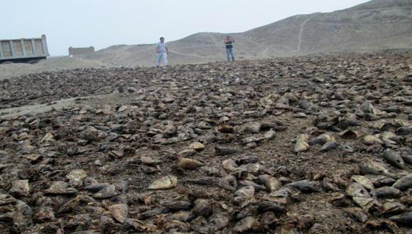 La Libertad: Incautan 80 toneladas de residuos de pescado