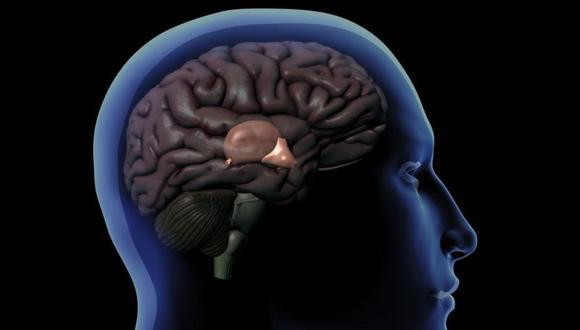 La glándula pineal es del tamaño de un guisante y se encuentra detrás del hipotálamo. (GETTY IMAGES)