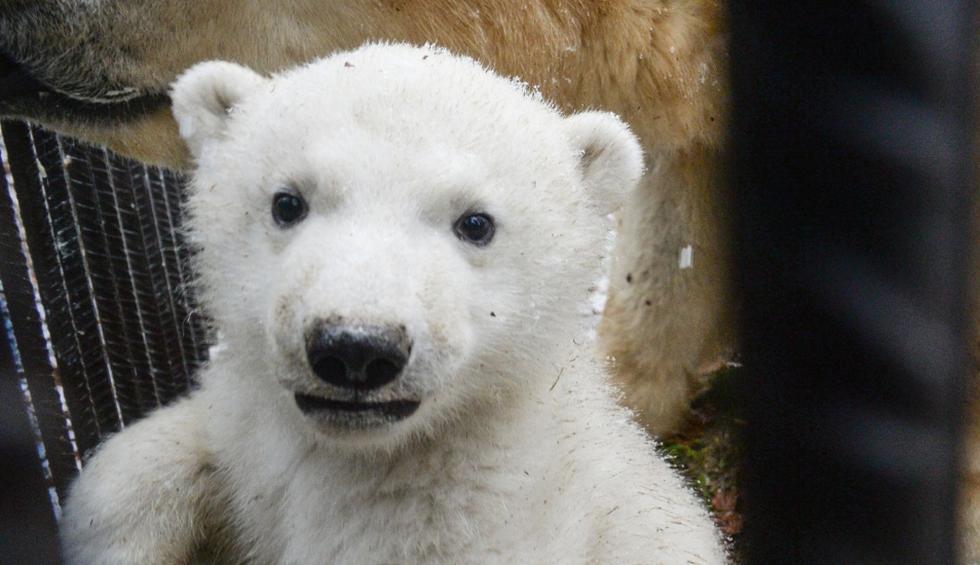 La singular grabación tuvo lugar en el Zoológico de Toronto, Canadá. (AFP)