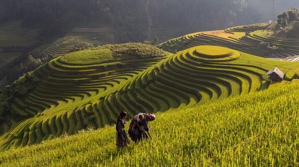 Mu Cang Chai, un lugar lleno de hermosas terrazas de arroz - 1