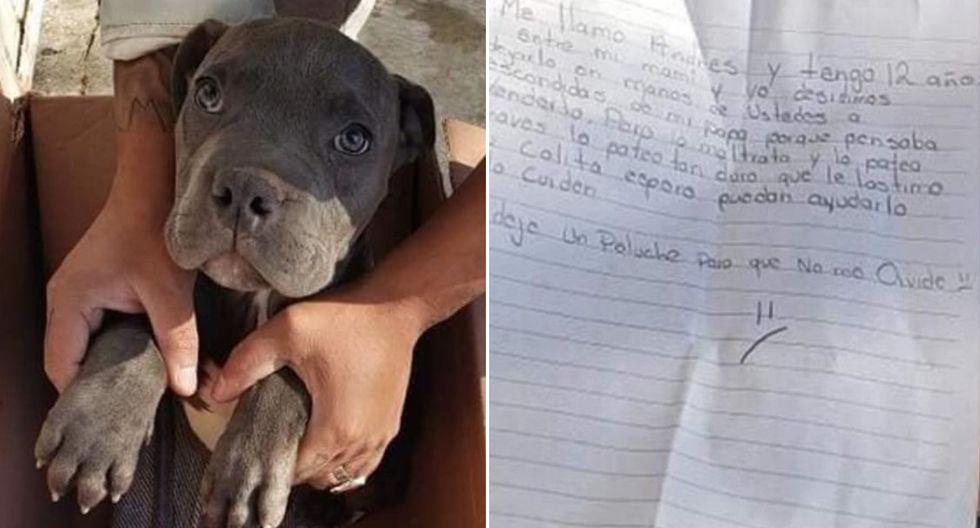 Con una emotiva carta, el niño de 12 años dio en adopción a su perro porque su padre lo maltrataba. (Facebook | Amigos de Lucho)