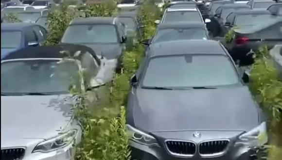 Más de 3.000 autos BMW completamente nuevos están abandonados y oxidándose al aire libre en Vancouver.