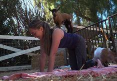 Yoga con cabras, una nueva tendencia practicada en granjas de EE.UU. [VIDEO]