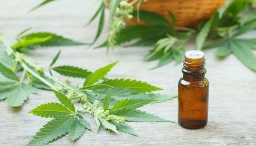 La ley promulgada por el Gobierno garantiza el derecho a la salud de pacientes que utilizan aceite y pomadas de cannabis y sus derivados, regulando además su investigación, importación y comercialización.