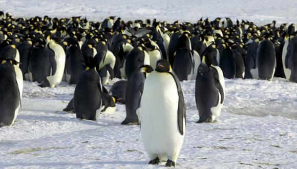 Virus de gripe aviar está presente en pingüinos de la Antártida
