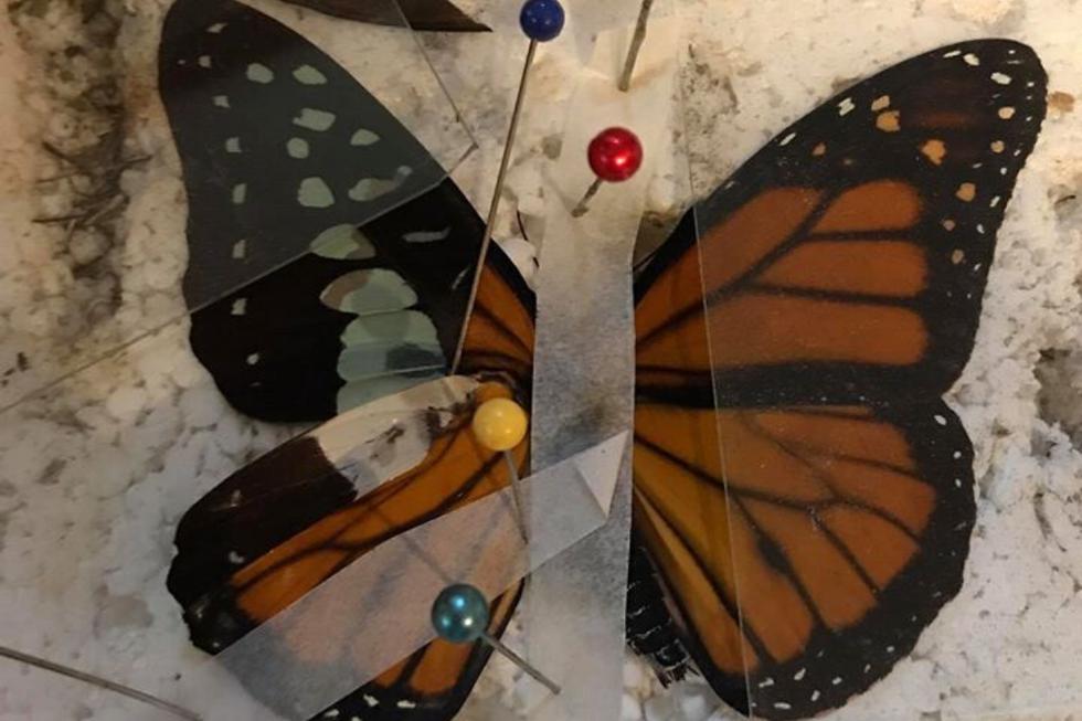 Una joyera le devolvió a una mariposa que nació con una deformidad su capacidad de volar libre como el viento. (Foto: Insect Art en Facebook)