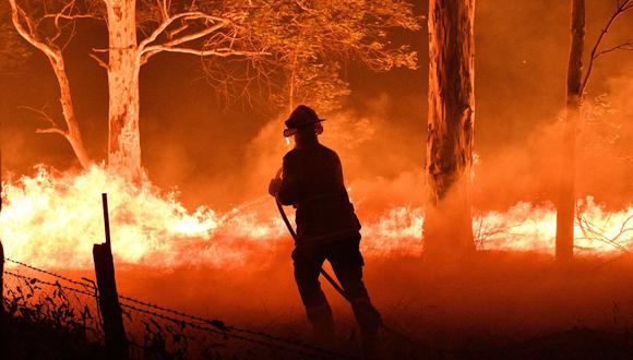 """""""De todas las historias sobre el devastador incendio en Australia, donde perecieron millones de árboles y animales de todo tipo, además de una veintena de seres humanos, hay dos que destacan"""". (Foto: AFP)"""