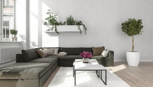 Las plantas dan vida a nuestro hogar. (Foto: Shutterstock)