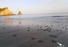 Ecuador: invasores intentan vender lotes en una playa vital para la tortuga carey