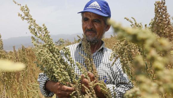 Peruano desarrollará nuevas variedades de quinua en el país