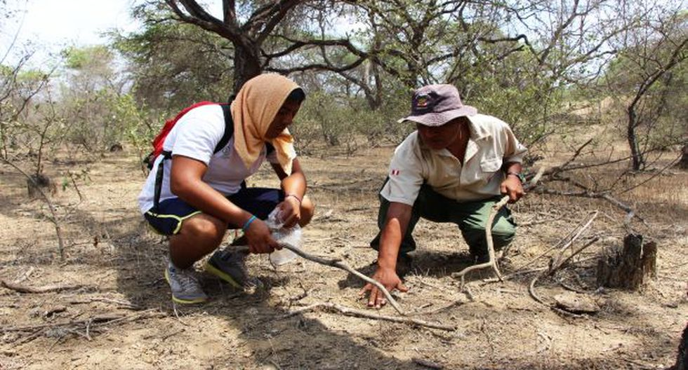 Lambayeque: universitarios reforestan el Bosque de Pómac - 2