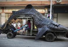 Chino transporta gigantesco tiburón ballena en un camión