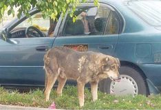Perro boliviano llora a su amo que murió hace 5 años