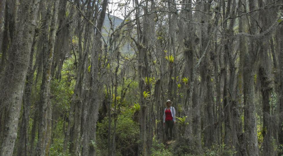 Todo es superlativo en esta reserva natural. Las taras juveniles tienen una dimensión que no   se observa en otras regiones. Y producen un vellón blanquecino que se usa para decorar el árbol navideño. (Texto y foto: Flor Ruiz)