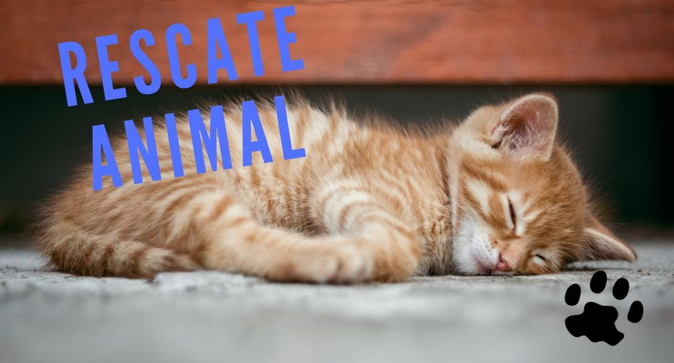 El video del gato fue subido a YouTube por ViralHog. (Foto: Referencial - Pixabay)