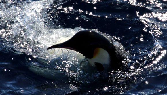Pingüinos dan la bienvenida a rompehielos de investigación en la Antártida