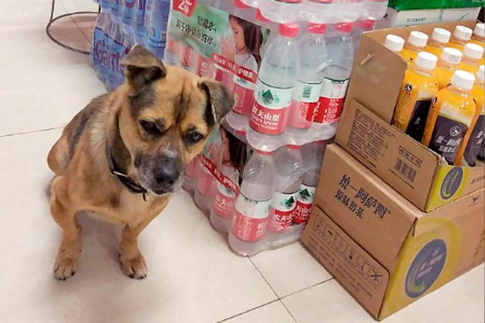 La historia de este  perrito ha conmovido a todos en China y diferentes  partes del mundo por la conmovedora espera. (Foto: Asian Wire/@thandojo)