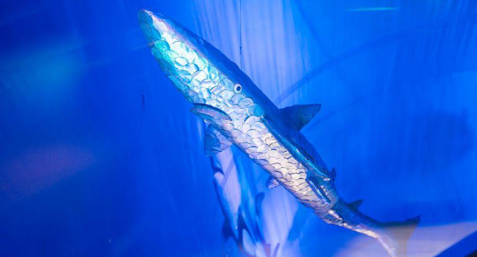 En el acuario se pueden ver tiburones hechos con latas.