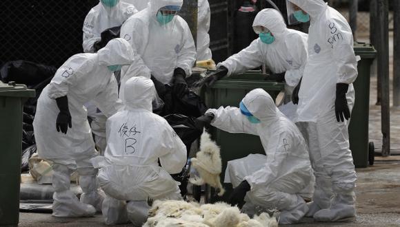 Las autoridades de Hong Kong decidieron matar a unas 20.000 aves sospechosas de tener el virus. (Foto: AP)