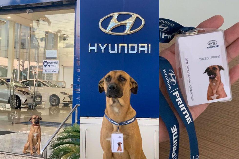 FOTO 1 DE 5 | Un perro callejero conquistó los corazones del personal de un concesionario, al punto que terminaron adoptándolo y ofreciéndole un trabajo. | Crédito: @tucson_prime / Instagran. (Desliza a la izquierda para ver más fotos)