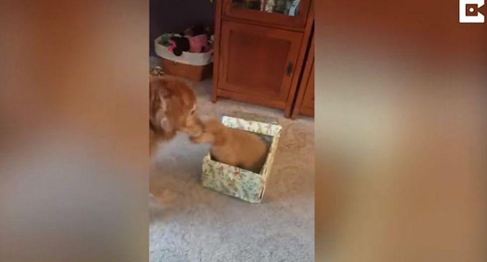 Esta es la historia del pequeño perro que llega para arreglarle la vida a 'Cash', el perro que había perdido a su 'hermanita'. | YouTube
