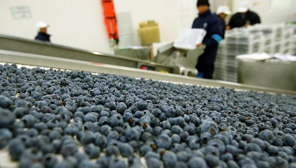 El Perú puede desarrollar nuevos productos derivados de los arándanos para aprovechar la demanda mundial, indicó ADEX. (Foto: GEC)