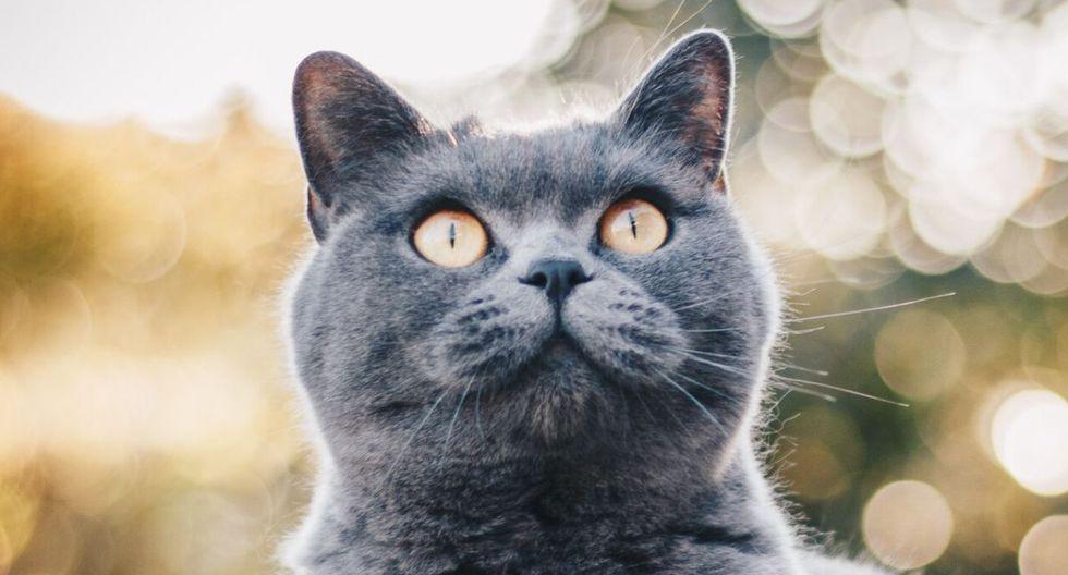 Foto 1 de 5: Los gatos protagonistas de disparatados videos publicados en Facebook.  (Foto referencial: Pexels)
