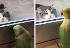 Una cotorra 'juega' a las escondidas con un gato y hace reír a cientos de usuarios