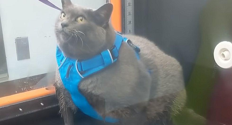 YouTube Video Viral | YouTube Video Viral | Astuto gato hace trampa a la hora de hacer ejercicios