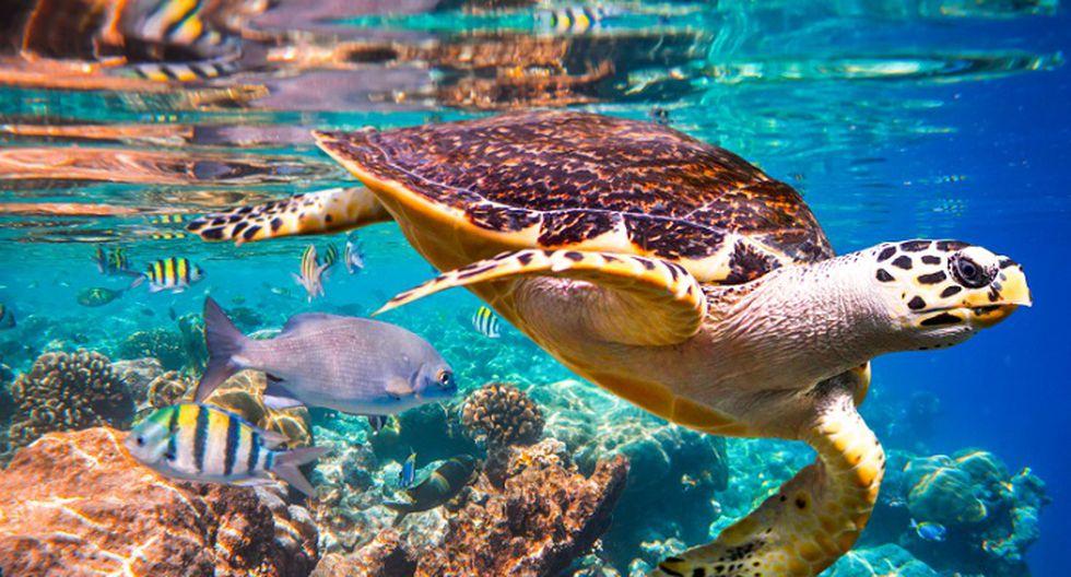 En los arrecifes de coral habita la cuarta parte de todas las especies marinas y esto beneficia a 500 millones de personas que viven en zonas tropicales. Foto: IPBES