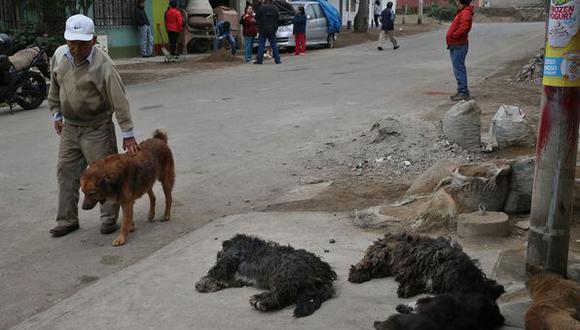 VES: envenenan a once perros para robar casas y autos