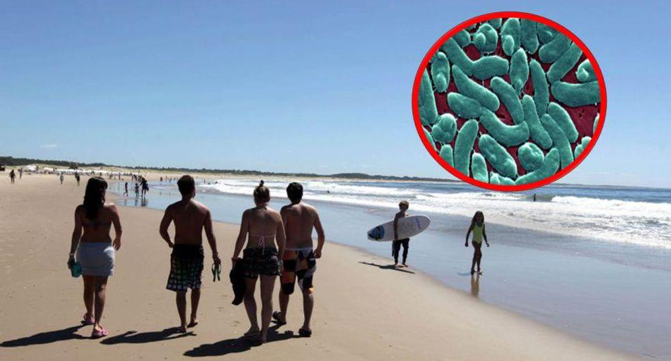 Uruguay: Hombre muere en una playa por una mortal bacteria Vibrio vulnificus en el mar. (AFP)