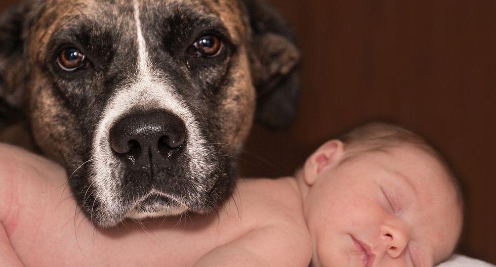 Este perro fue el héroe de la fecha luego de que rescatara a un pequeño bebé recién nacido que había sido dejado a su suerte en un desagüe. (Foto: Pixabay)