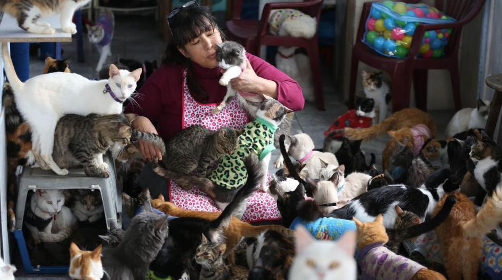 El milagro de vivir cuidando a 175 gatos que sufren leucemia - 1