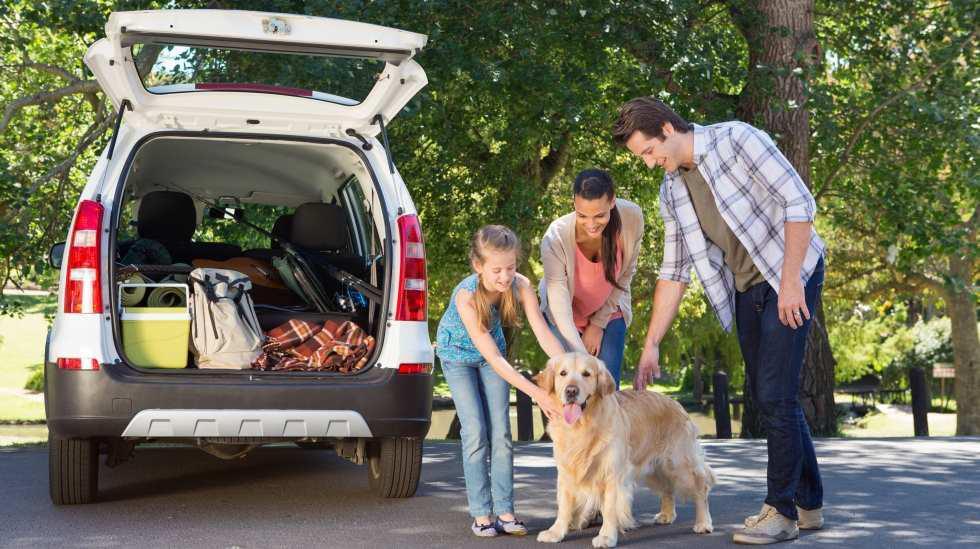 Consejos para viajar con tu perro en el auto [FOTOS] - 3