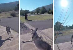 El extraño ataque de un canguro a un paracaidista ha dejado a muchos sorprendidos