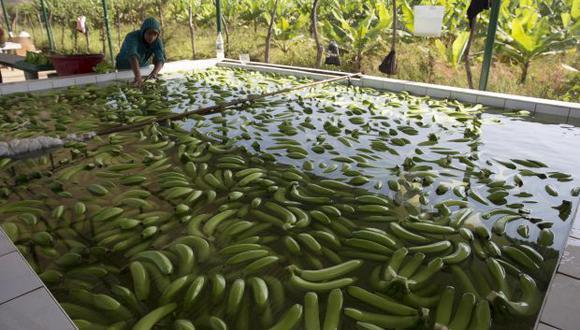 """""""Una pequeña parte de los alimentos que consume la población urbana hoy es importada, pero el grueso es producido por pequeños y medianos agricultores que, evidentemente, han elevado fuertemente su productividad"""". (Foto referencial: EFE)."""