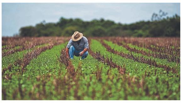 El Congreso modificó el plazo de la Ley 29811, que establecía que no ingresen ni se produzcan organismos vivos modificados hasta diciembre de este año. (Foto: Archivo)