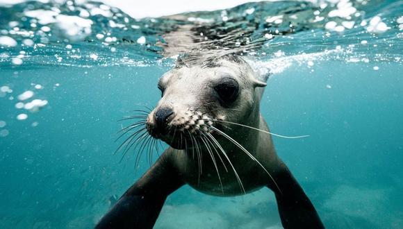 El clip protagonizado por el animal marino cautivó a cientos de internautas en Facebook y otras redes sociales. (Foto referencial - Pexels)
