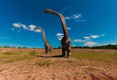 Hallan en Argentina un dinosaurio que podría ser el animal terrestre más grande de la historia