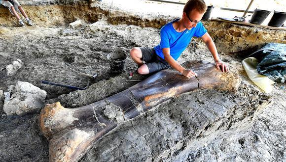 Los científicos están maravillados con la gran preservación del fémur. (Foto: AFP)