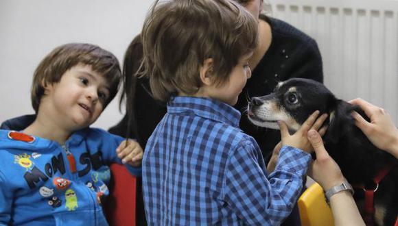 Los científicos concluyeron que la exposición a los elementos (como las bacterias) que los perros llevan puede tener un efecto protector contra los síntomas del asma. (Foto: AP)