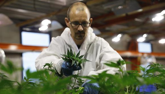 Grecia quiere legalizar el uso medicinal de cannabis. (Foto: AFP)